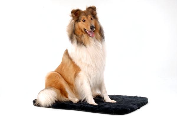Pet rug Sheepy |
